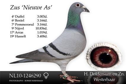 10-1246290