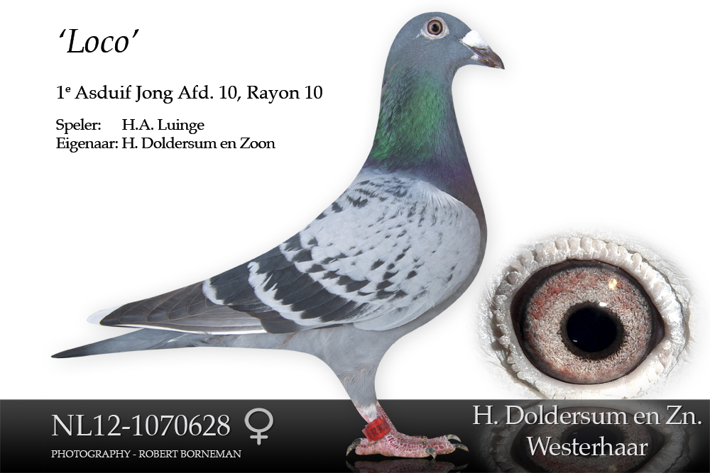 nl12-1070628
