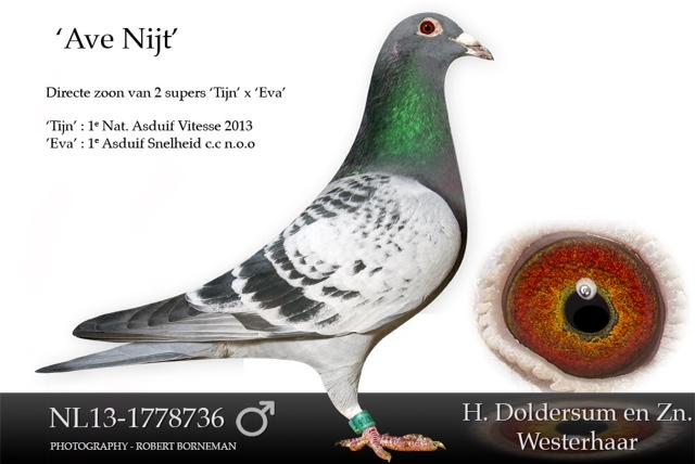 nl13-1778736