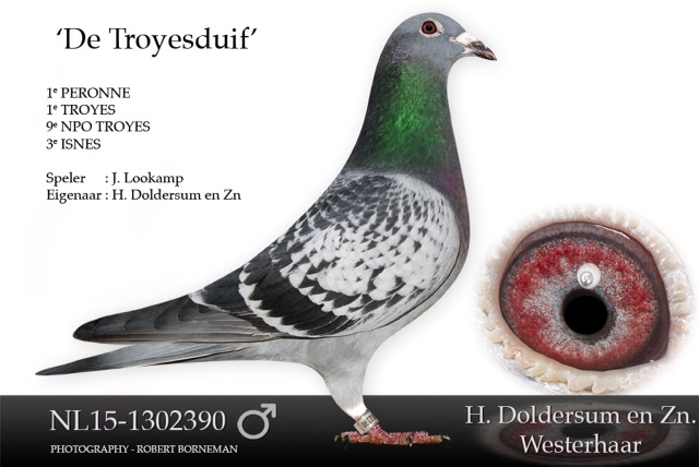 nl15-1302390
